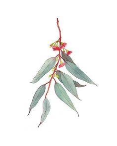 Red Flowering Gum Print by Winter Owls, Eucalyptus Blossom Painting, Australian Botanical Art, Eucalyptus Plant Wall Decor