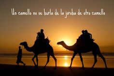 """Un camello no se burla de la joroba de otro camello"" #frases para #reflexionar"