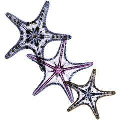 Coloured X-ray of three starfish, a marine animal… Mother Daughter Tattoos, Tattoos For Daughters, Mini Tattoos, Cute Tattoos, Tatoos, White Girl Tattoo, Antler Tattoos, Marine Tattoo, Typical White Girl