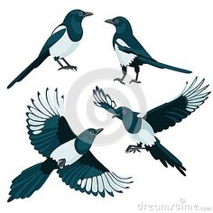 Three are two sitting magpies and two flying magpies in cartoon style