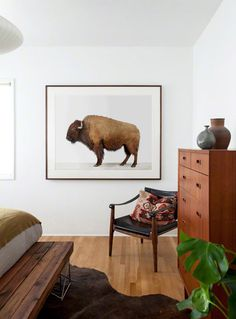 Buffalo available via : www.theanimalprintshop.com/american-buffalo/