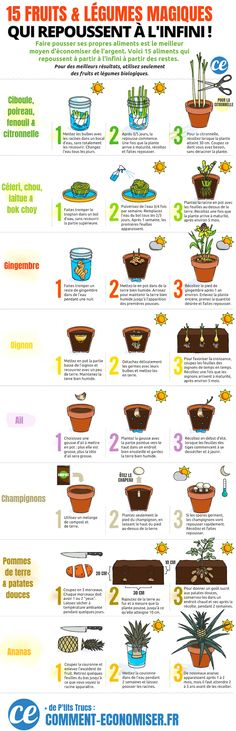 15 fruits & vegetables that you can grow endlessly at home! Garden Diy On A Budget, Easy Garden, Easy Vegetables To Grow, Veggies, Organic Gardening, Gardening Tips, Vegetable Gardening, Budget Flowers, Supermarket