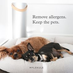 The air purifier, reinvented. Molekule's award-winning PECO technology destroys pollutants like viruses, bacteria, mold & more. Cute Funny Animals, Cute Baby Animals, Funny Dogs, Animals And Pets, Cute Cats, Cute Puppies, Dogs And Puppies, Cute Animal Pictures, Dog Care