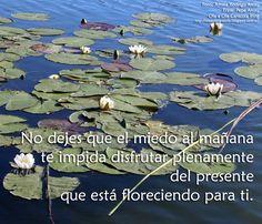 ... No dejes que el miedo al mañana te impida disfrutar plenamente del presente que está floreciendo para ti.