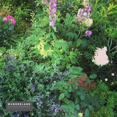 pflegeleicht und wunderschön: ein Staudenbeet im Bio-Garten. Bereits im ersten Jahr sehr schön angewachsen. Herbs, Plants, Low Maintenance Garden, Herb, Plant, Planets, Medicinal Plants
