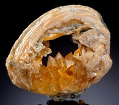 Golden Calcite inside a Fossilized Clam Shell (Mercenaria Permagna) - From Rucks Pit, Fort Drum, Okeechobee County, FloridaFrom the Pliocene-Pleistocene Epochs