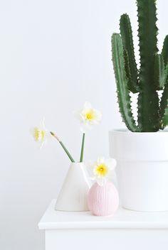 cactus + daffodil