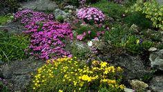 Realizzare un giardino fai da te: i giardini rocciosi