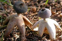 Unos científicos fueron sorprendidos por esta nueva especie de hongo con forma de humano