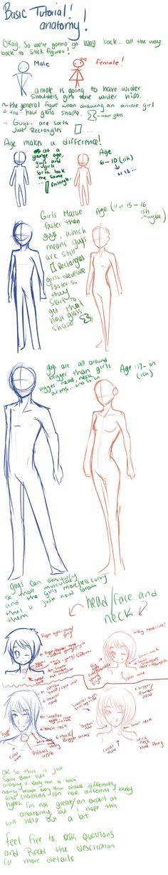 Basic Tutorial #3: Anatomy by Reverrii.deviantart.com on @DeviantArt