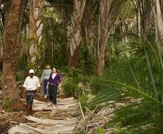 Walk through palm forests in the Kosi Bay Nature Reserve, KwaZulu-Natal, South Africa