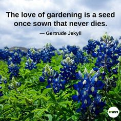 The love of gardening is a seed once sown that never dies — Gertrude Jekyll