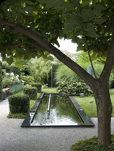 Green tones around a reflecting pool. Garden Shrubs, Garden Pool, Water Garden, Herb Garden, Pool Water Features, Water Features In The Garden, Contemporary Garden Design, Landscape Design, Small Gardens