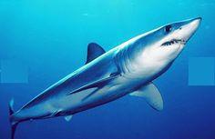 Dom Escobar: Top 10 viagens de Tubarão mais incríveis