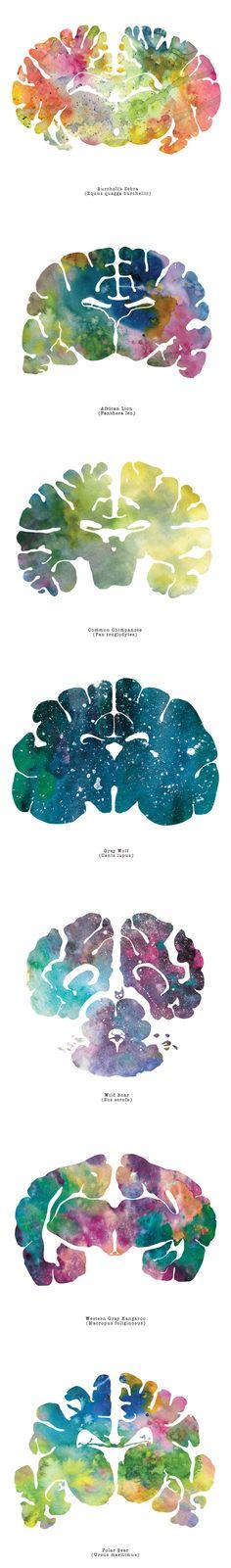 I Watercolor Animal Brain Scans Artist watercolors animal brain scans. Watercolor Animals, Watercolor Paintings, Watercolor Logo, Illustrations, Illustration Art, Brain Art, Medical Art, A Level Art, Anatomy Art