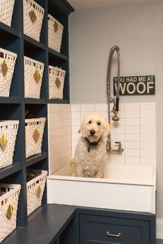 dog wash station dog wash station with widespread kitchen faucets laundry room transitional and lockers dog wash station with baskets laundry room transitional and chrome used dog wash station for sal. Love it, high for my back issues Animal Room, Dog Tub, Metal Dog Kennel, Pet Washing Station, Interior Exterior, Interior Design, Home Remodeling Contractors, Dog Salon, Laundry Room Design
