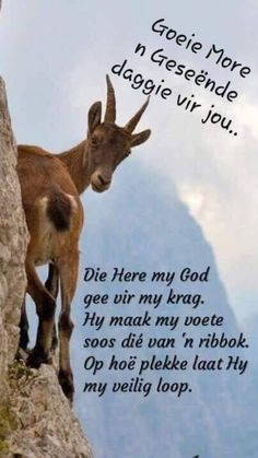 Good Morning Wishes, Good Morning Quotes, Goeie More, Christian Messages, Teamwork Quotes, Afrikaans, Christianity, Verses, Love Quotes