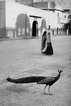 Inde, 1956. Sur une place de Jaipur, la photographie en noir et blanc ne peut malheureusement pas montrer la rime entre les couleurs du sari et celles des plumes du paon.