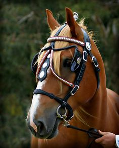 """""""Clydesdale and Heavy Horse Festival 2010"""" (Nash, the Suffolk Punch) by Kathryn Potempski   RedBubble"""