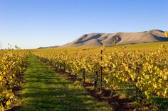 Santa Ynez features great views, and many galleries, cafes, wine shops and boutiques.