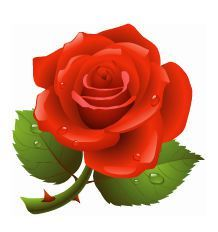 Hindi Poems on Rose