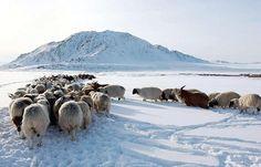 Mongolian winter, photo courtesy of Citizen Treasure Foundation.