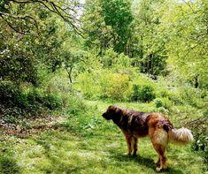Le jardin en fleur au printemps Dogs, Animals, Gardens, Wooden Terrace, Flower, Spring, Bedroom, Home, Animales