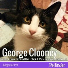 Does your pet have a celebrity doppelganger? Click through to learn more about the dashing George Clooney. #PetAdoption