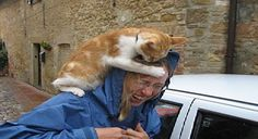 This Woman Thinks That Fine If She Hurts A Cat! But Watch What Happends Afterwards!
