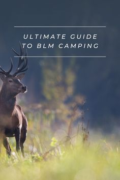 BLM camping is a great way to camp because you can stay more places for low cost or even free. Wilderness First Aid, First Aid Classes, Satellite Phone, Making Water, Bureau Of Land Management, Tent Campers, Camping Products, Ways To Travel, Survival Skills