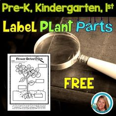 Plants - Label the Plant Parts Freebie Worksheet 1st Grade Science, Kindergarten Science, Elementary Science, Preschool Classroom, Free Powerpoint Presentations, Sequencing Cards, Plant Labels, Free Lesson Plans, Plant Science