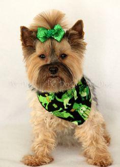 Irish Puppies Bandana
