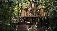 Cosy and Luxury Treehouse in England – Fubiz Media