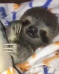 baby sloth 🦥