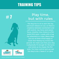 Training Tips from Animal Trainers at The Animal Keeper Doggies, Dogs And Puppies, English Bulldog Care, Basic Dog Training, Dog Facts, Confidence Quotes, Service Dogs, Pet Stuff, Twists