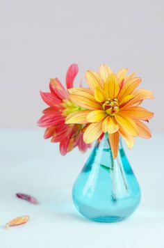 Orange Jescot Julie dahlia with aqua stained glass vase - complementary colours.