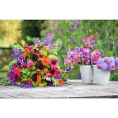 Hardy Annual #Cutting #Patch Collection Here are all my favourite hardy annual flowers, supplied with a detailed planting plan, to give you 3-4 vases of flowers a week from June-October.