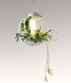General lighting | Suspended lights | Babylone | Greenworks. Check it out on Architonic