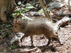 Nella giangla del nostro parco abitano le specie rare degli animali messicani. https://aktun-chen.com/it/attendance/combo-item