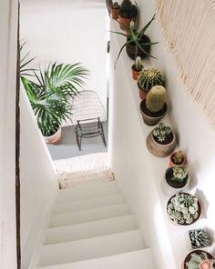 Cactus pour l'escalier de l'entrée