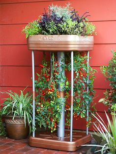 Planting Tomatoes in an Upside Down Containers with Companion Herbs. Now there's some creativity! More helpful info at http://www.tomatodirt.com/growing-tomatoes-in-pots.html.