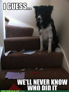 Unsolved Mysteries: Dog Edition