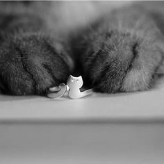 My Cute Kitten Fashion Ring In 925 Brushed Sterling Silver