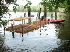 Floatingwetlands