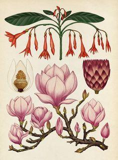 O artista inglês Katie Scott reproduz plantas, insetos e fungos clássicos da biologia em ilustrações psicodélicas. Seu trabalho já foi encomendado por empresas como o New York Times, Buzzfeed, Nike, Urban Outfitters e Converse. Compartilhe: