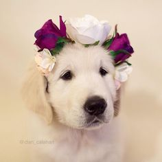 Golden Puppy Flower Girl                                                                                                                                                                                 More Cute Puppies, Cute Dogs, Dogs And Puppies, Doggies, Baby Animals, Funny Animals, Cute Animals, Wild Animals, Beautiful Dogs