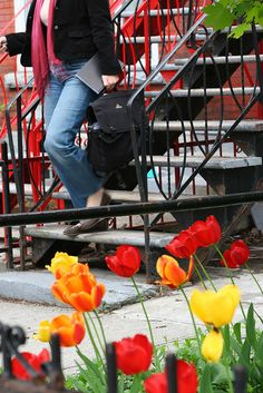 Tulips on St Urbain by Jonathan!, via Flickr