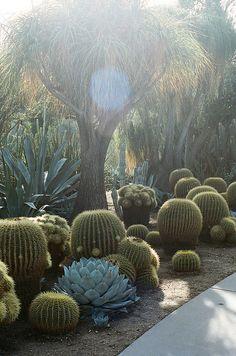 Jardim do Deserto, que faz parte dos Jardins Botânicos The Huntington em San Marino, estado da Califórnia, USA. Os Jardins Botânicos, junto à Biblioteca Huntington, e às Coleções de Arte,  constituem uma instituição educacional e de pesquisa baseada em coleções estabelecidas por Henry E. Huntington (1850-1927).  Fotografia: Brian Ferry.