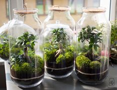 Las w słoiku Nature's Miracle, Bonsai Art, Plant Design, Garden Projects, Indoor Plants, Flora, Wedding Decorations, Green, Diy