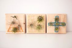Air Plants + String Art = Living Wall Art! via Brit + Co.